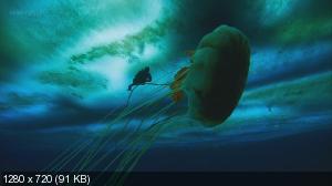 Застывшая планета / Frozen Planet (2011) BDRip 1080/720p + BDRip